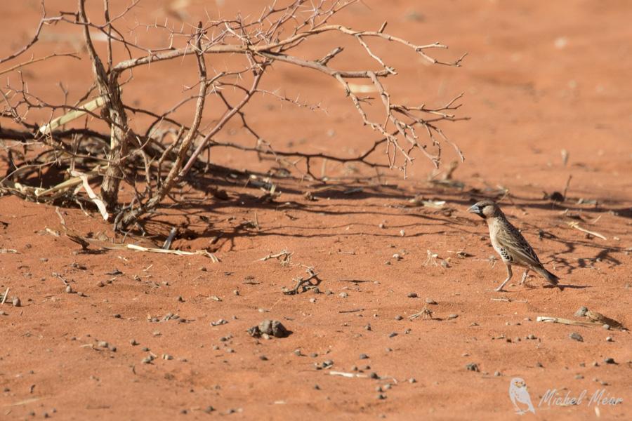 Namibie-713.jpg
