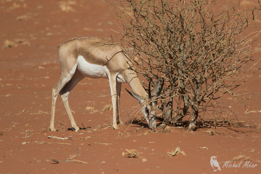 Namibie-716.jpg