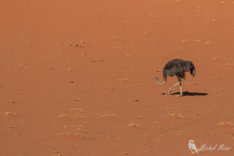Namibie-717.jpg