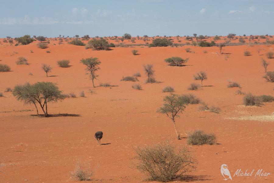 Namibie-718.jpg