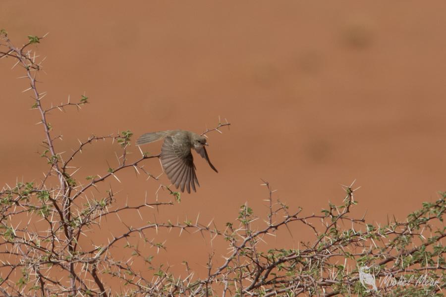 Namibie-721.jpg