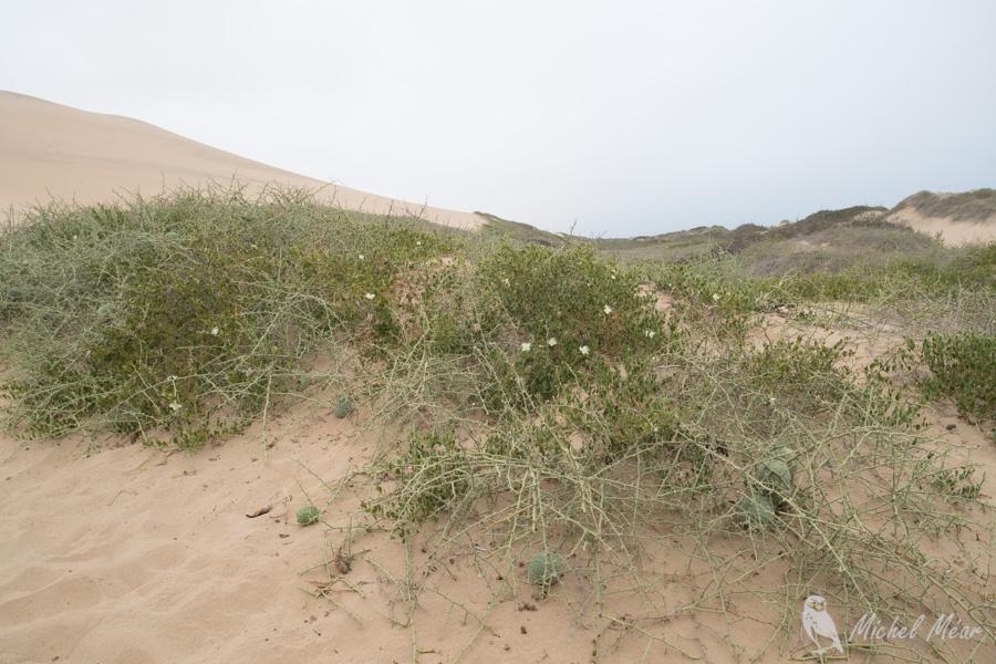 namibie-531.jpg