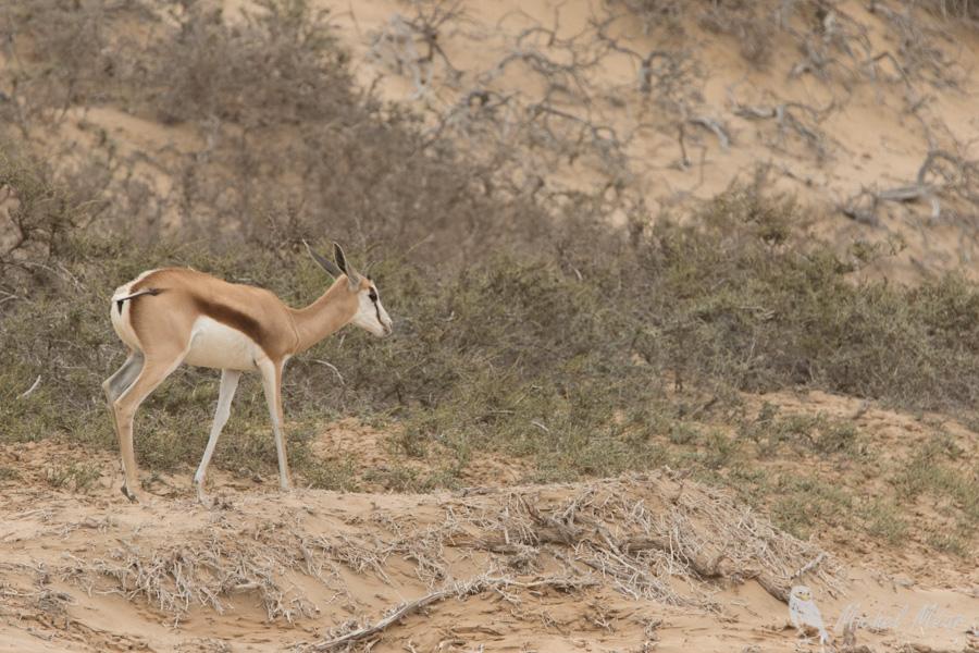 namibie-533.jpg