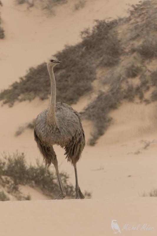 namibie-534.jpg