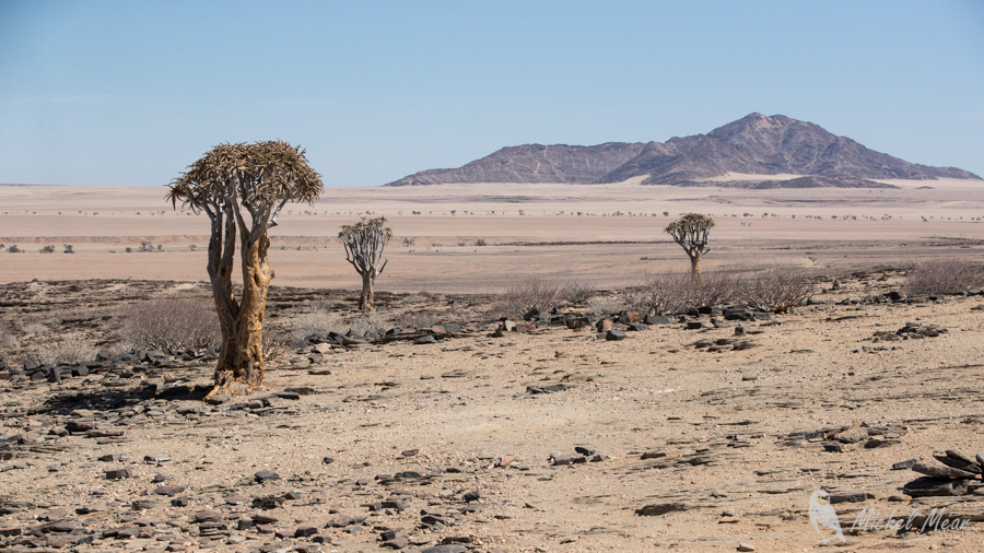 namibie-554.jpg