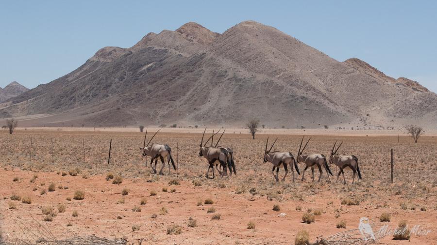 namibie-562.jpg