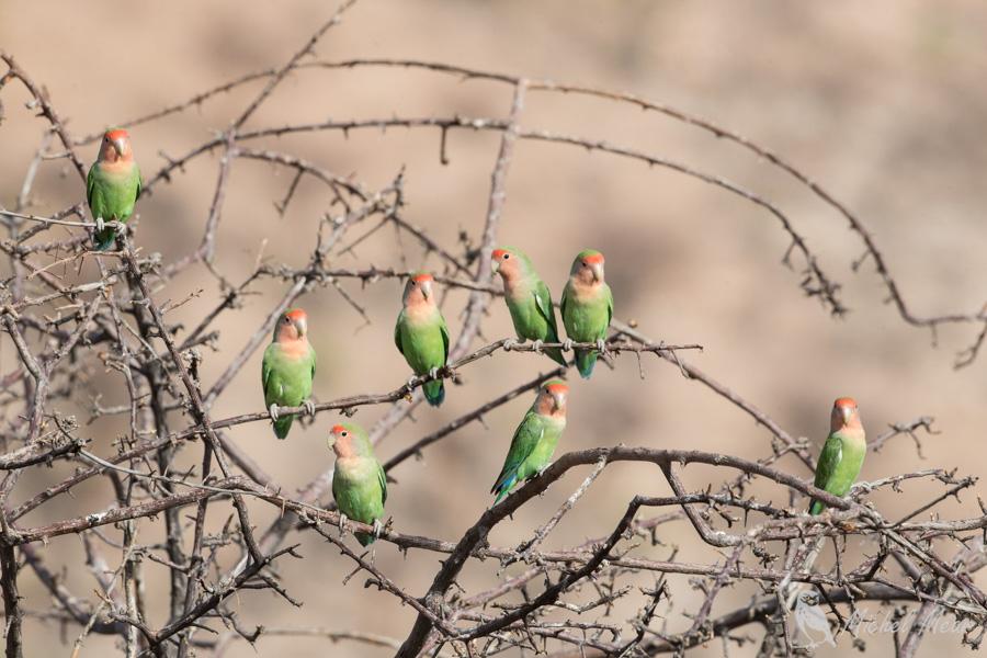 Namibie-348.jpg