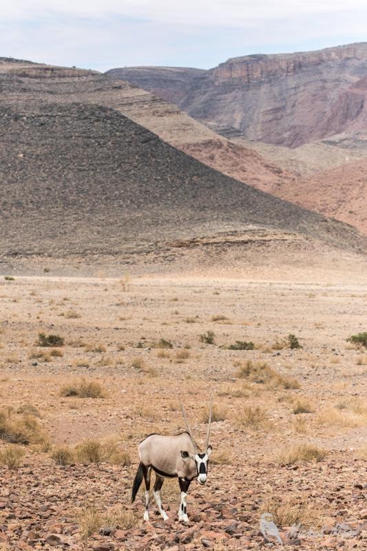 Namibie-633.jpg