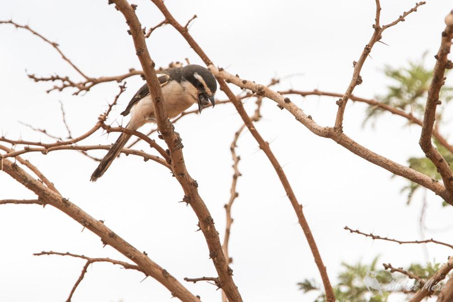 Namibie-635.jpg